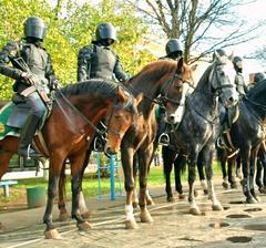 доска бесплатных объявлений mabby работа в полиции
